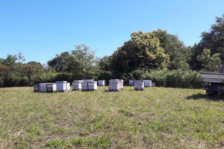 Miel de miella de Châtaignier fait dans le Pays Basques par un apiculteur www.mielapimelli.com