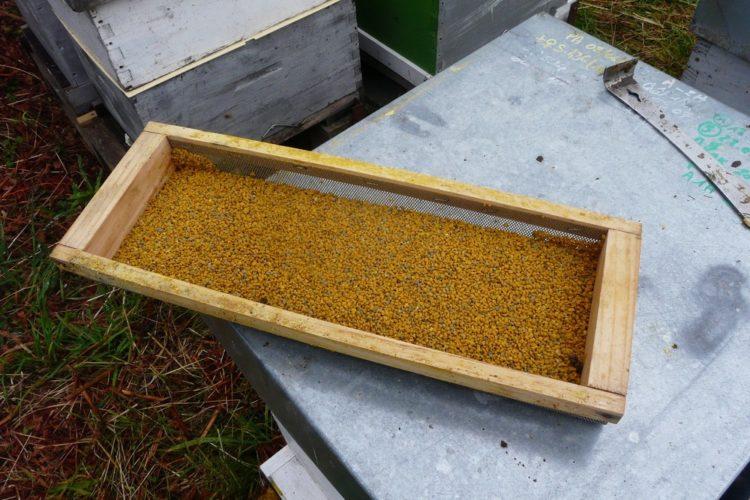 Propolis production artisanale fait dans nos rucher www.mielapimelli.com
