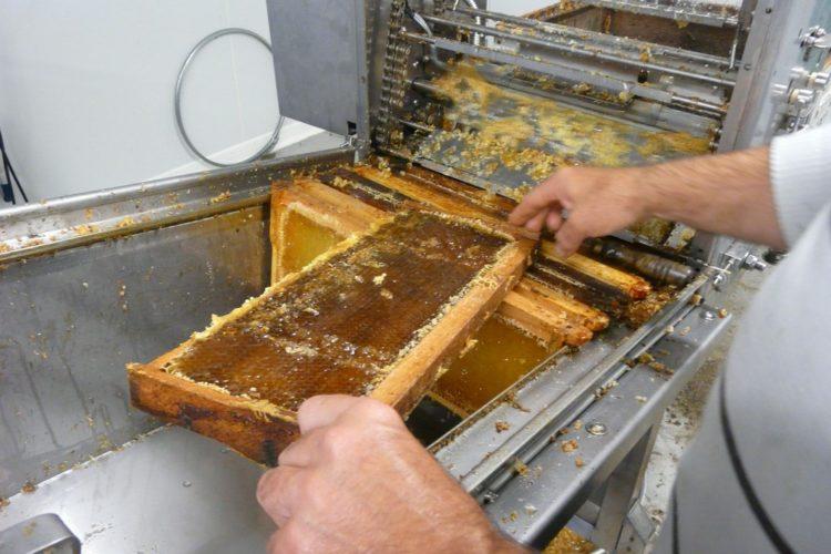 Miel de Tournesol fait dans le Gers par un apiculteur www.mielapimelli.com